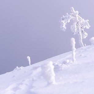 Alleine im Frost