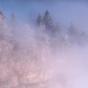 Frostige Bäume