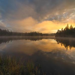 Morgennemel am Moor