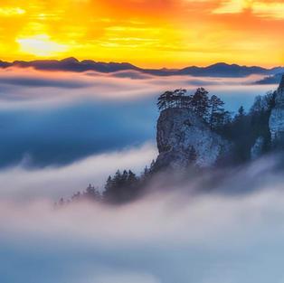 Ankenballen im Nebel