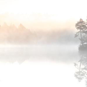 Etang -Baum im Nebel