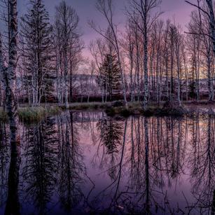 Morgens am Moor