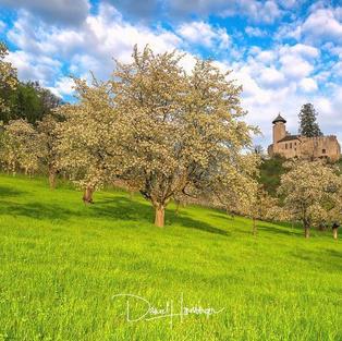 Schloss mit Baum