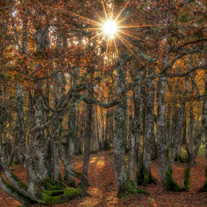 Autumn m Sonnenstern