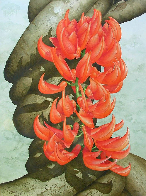 """""""Flame of the Forest"""" - Mucuna bennettii"""