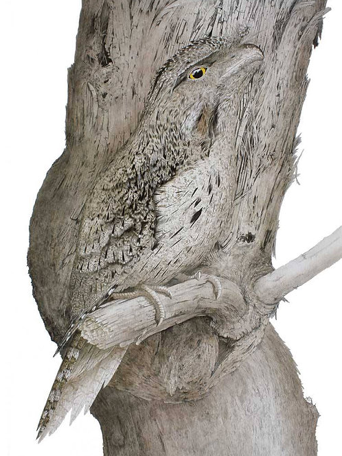 """Blending In"" - Tawny Frogmouth (on paper)"