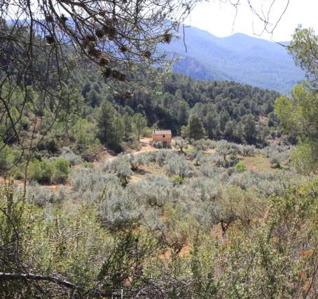 FINCA HOSTALETS - Ein Öl, das eine wilde und hundertjährige Essenz bewahrt