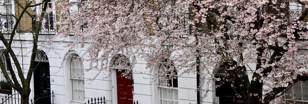 spring in barnsbury street