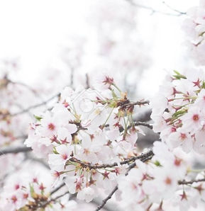 spring%25203_edited_edited.jpg