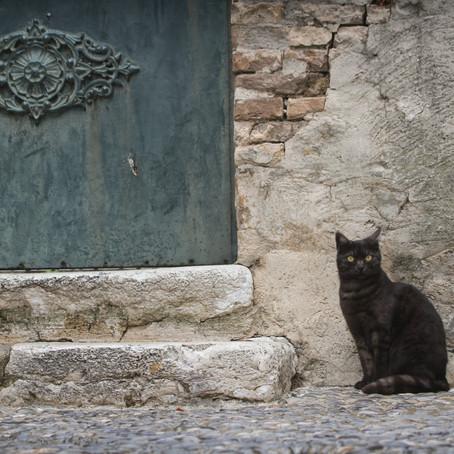 Exploring the Provence