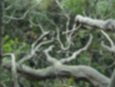 Image of oak trees - Oakland Therapist, EMDR Therapist, About Therapy