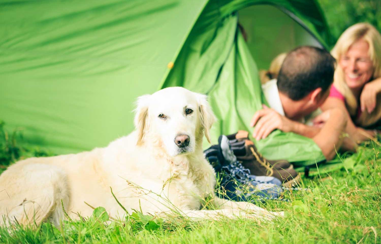 shutterstock_562269814_dog-family-tent.j
