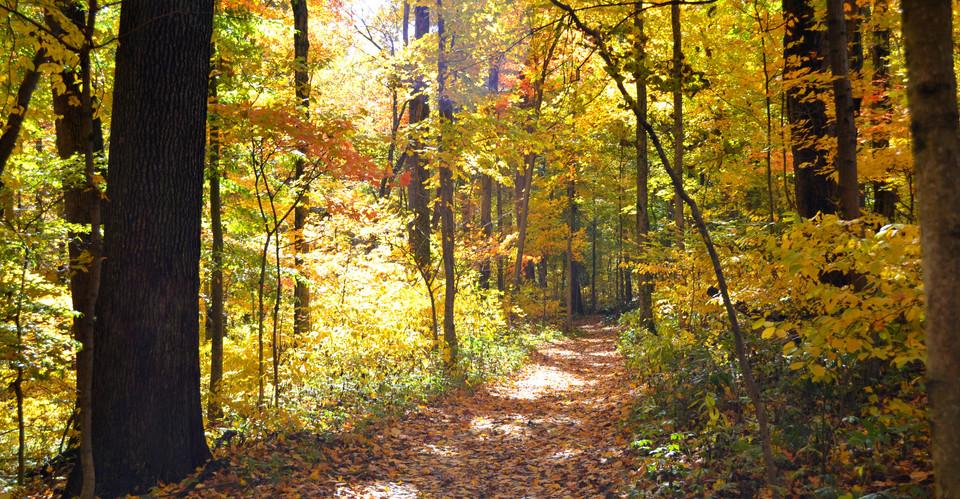 Fall-Trail.jpg