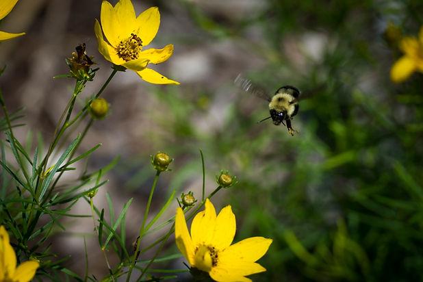 Flowers-and-Bee.jpg