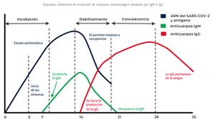 Descripción temporal de la infección y serología del coronavirus (Covid-19)