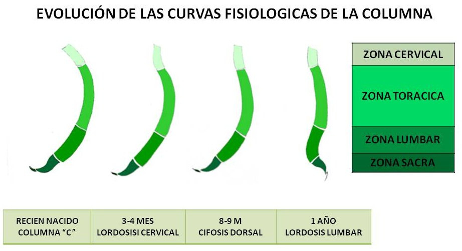 Evolución curvas fisiológicas