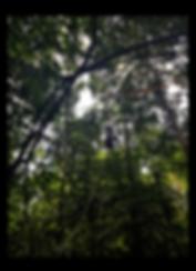 Screen Shot 2019-07-15 at 13.11.46.png