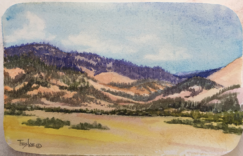 Meadow and Pines