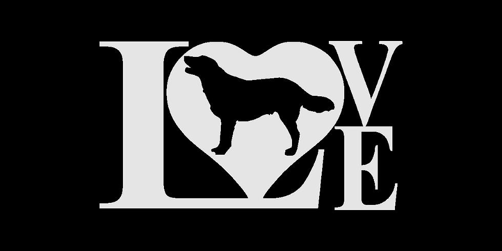 LoveMy Dog License Plate.png