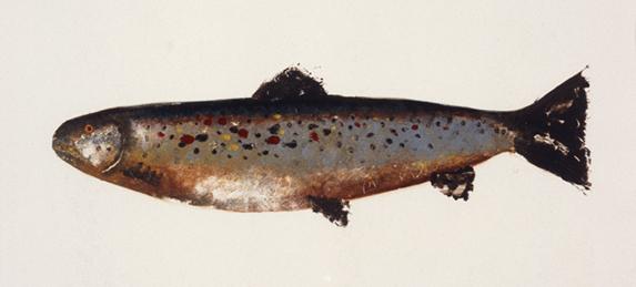 MBW Fish 2