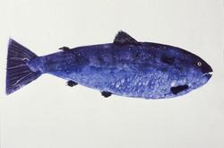 MBW Fish 16