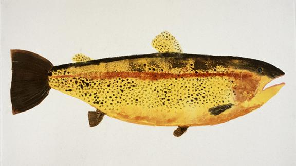 MBW Fish 1