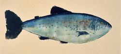 MBW Fish 5