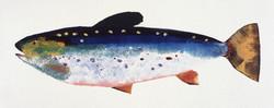 MBW Fish 10