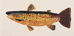 MBW Fish 6
