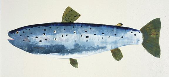 MBW Fish 4