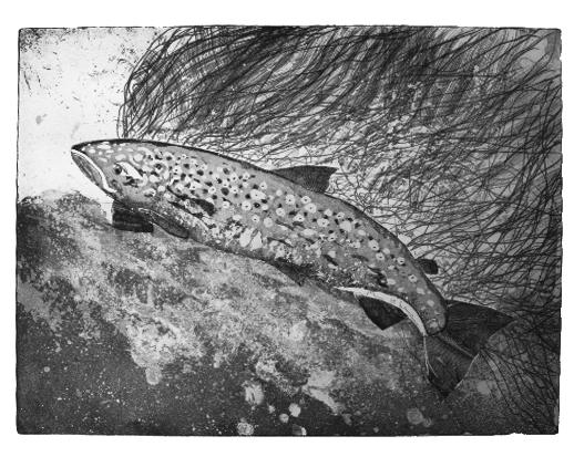 etch-Salmon2