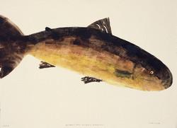 MBW Fish 17