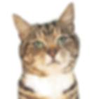 modèle Cat