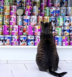 I WISH we had this much cat food!