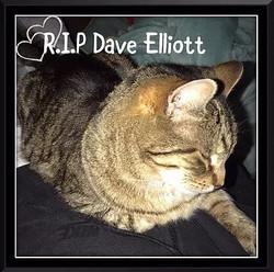 Dave Elliott