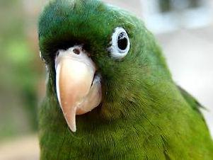 parrot-kid_19-114938.jpg