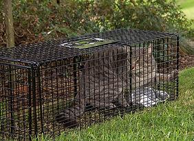 Cat trap.jpg