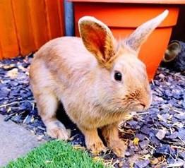 Runaway Rabbit