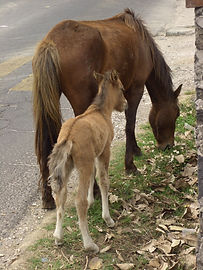 Mother and baby horses rooming the stree