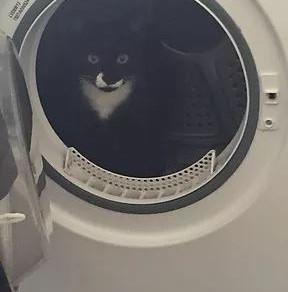 Cloughie Cat's Challenge