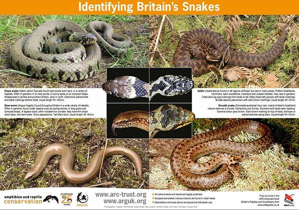 Snake comparison.JPG