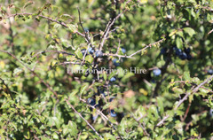 Sloe's on top of the White Cliffs of Dover