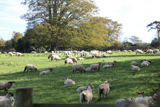 Countryside in Kent