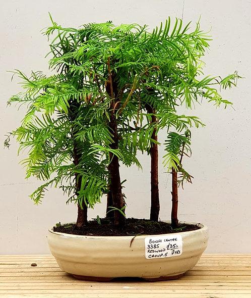 3385 Redwood group