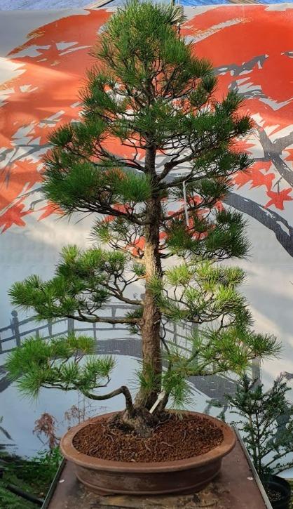 2926 White Pine