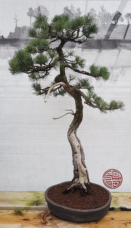 2268 White Pine