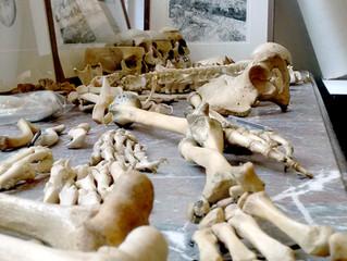 Foramen or Foramina, Artist's Anatomy