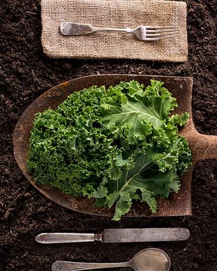 Kale%20organic%20farm%20to%20table%20hea