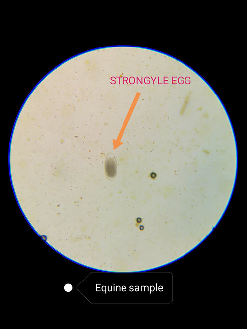 Worm Egg Count Test