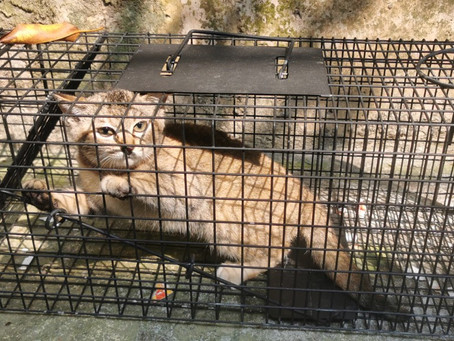 "SPCA ""Cat Colony Care Programme"" 貓隻領域護理計劃"